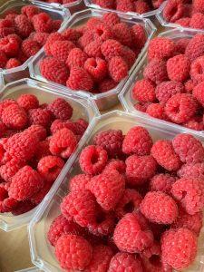 røde og store bringebær i 300 grams kurver